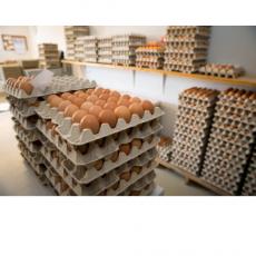 Egg & egg productos